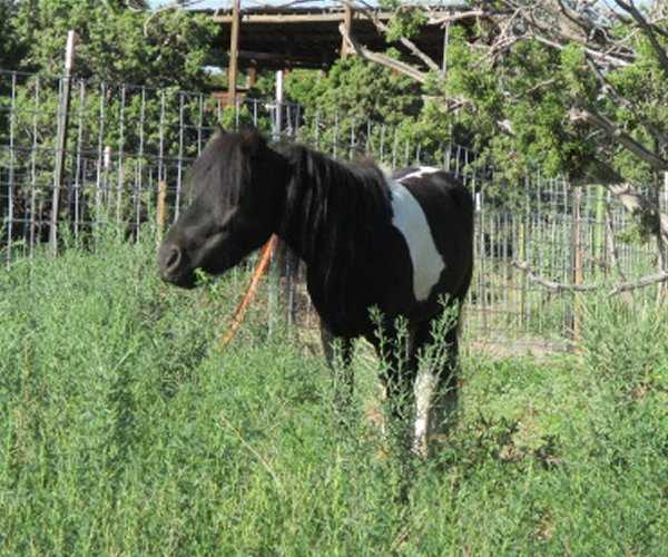 Dawg House Ranch / Miniature Horses / Santa Fe, NM
