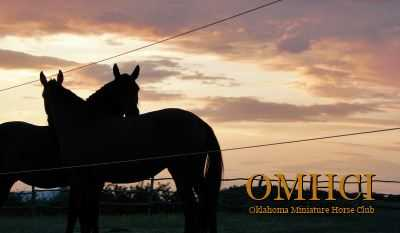 The Oklahoma Miniature Horse Club
