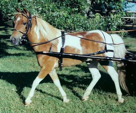 Miniature Horse and Pony Harness : Wagons / Carts / Harness
