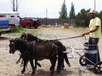 Miniature Horse Chariot  Blue